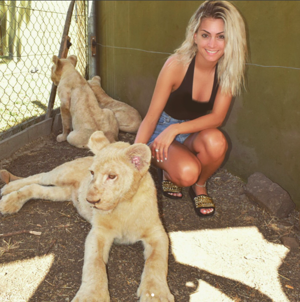 rencontre lion et tigre