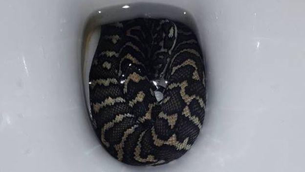 australie-une-femme-se-fait-mordre-par-un-serpent-en-se-rendant-aux-toilettes