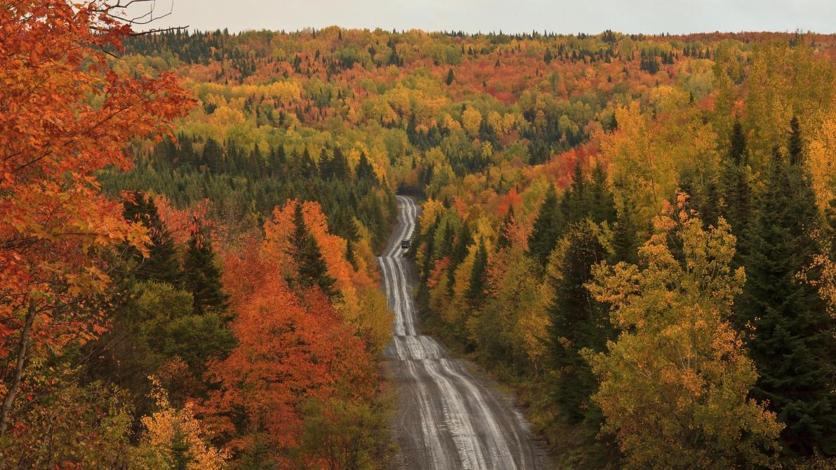 Un cri très étrange enregistré au beau milieu d'une forêt canadienne