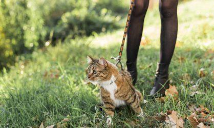 Un homme retrouve son chat 7 ans après sa disparition !