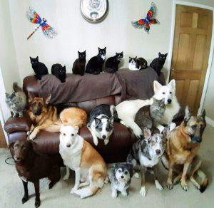 17 chiens et chats réunis en une photo !