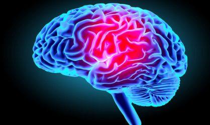 Apprenez à bien prendre soin de votre cerveau