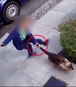 Un chat est violenté par un petit garçon, mais il se venge bien de son agresseur