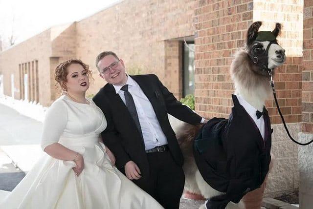 Il arrive au mariage de sa soeur avec un lama habillé en smoking