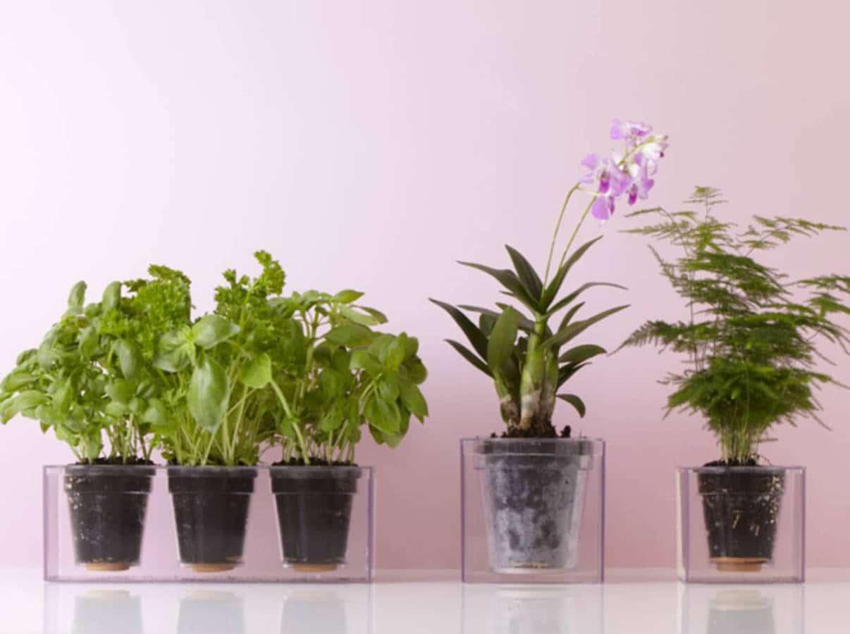 Cette plante faite pour vous selon votre signe astrologique