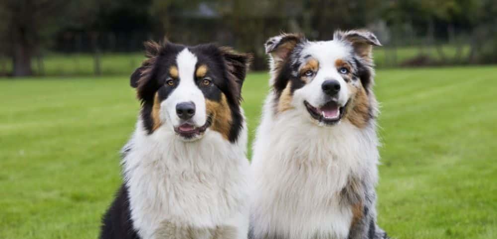 Cette race de chien qui vous convient selon votre signe du zodiaque