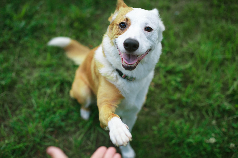 Quels sont les traits de caractère de votre chien ou votre chat selon son signe astrologique ?