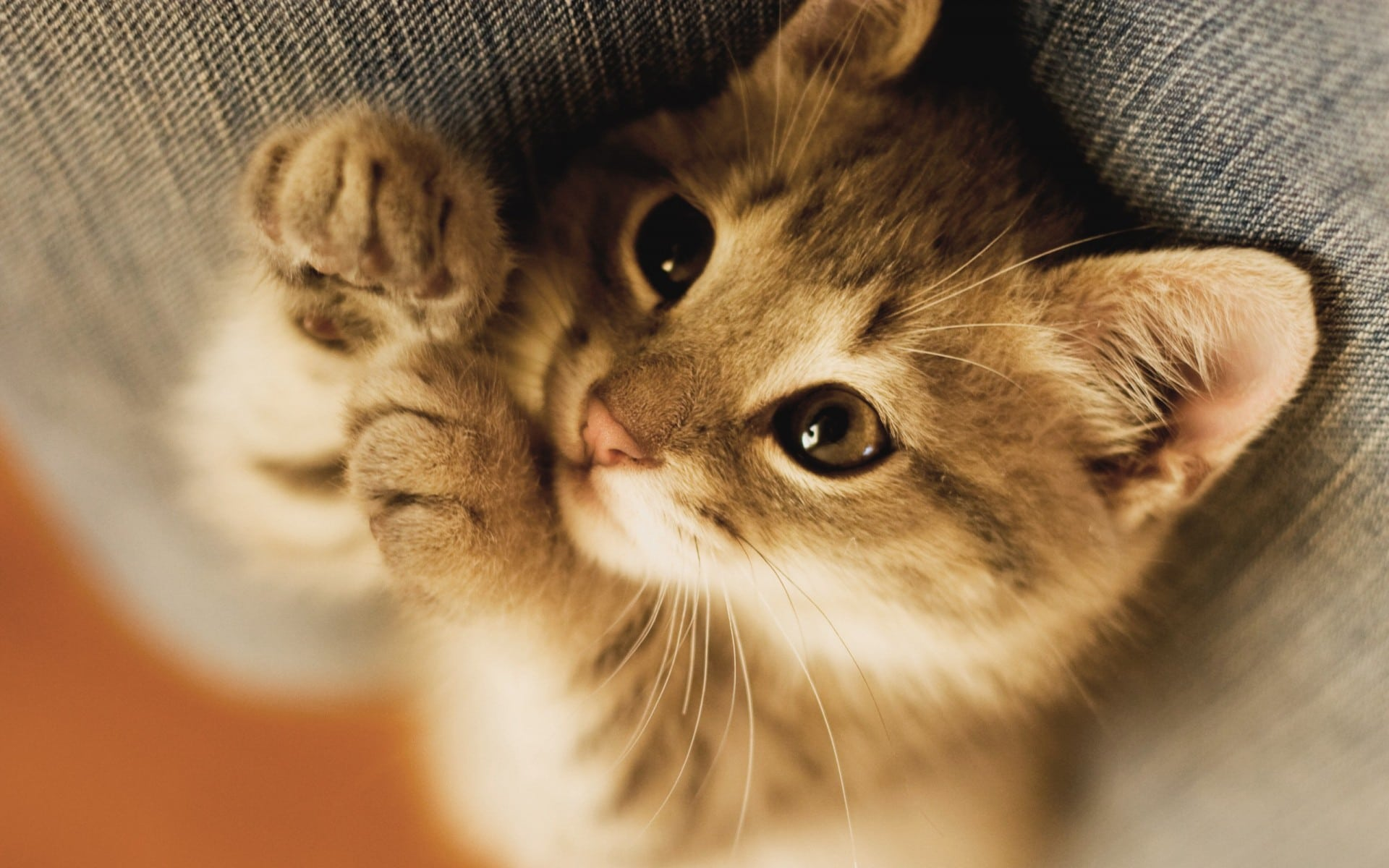 Besançon : une trentaine de chats congelés découverts dans une maison insalubre