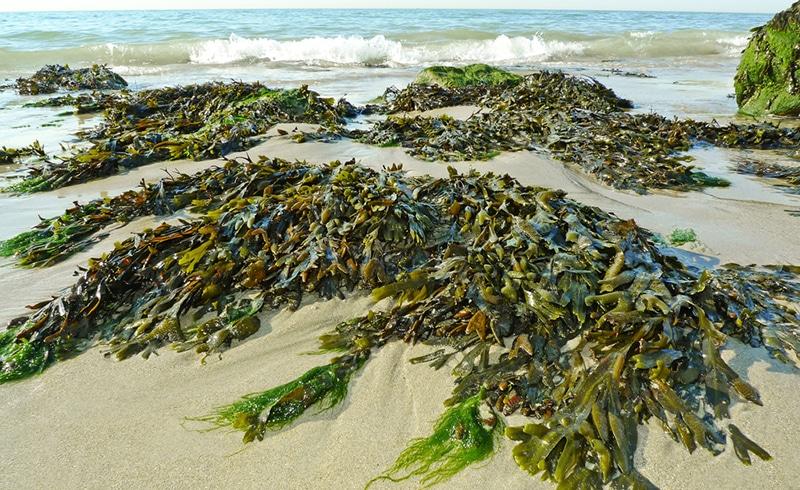 océan cosmétique marine
